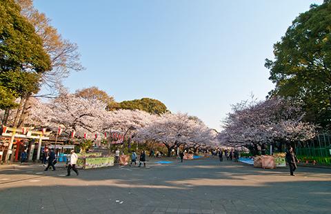 桜と音楽のハーモニー!上野公園で音楽祭始まる