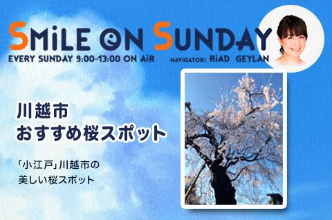 「小江戸」川越市の美しい桜スポット