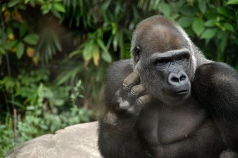 愛好家が教える、上野動物園のマニアックな楽しみ方