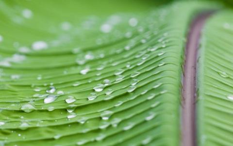 雨嫌いの野村訓市 「熱帯地方のスコールだけは好き」