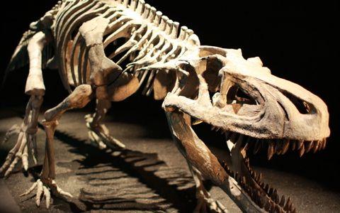 恐竜、知られざる化石発見の裏話