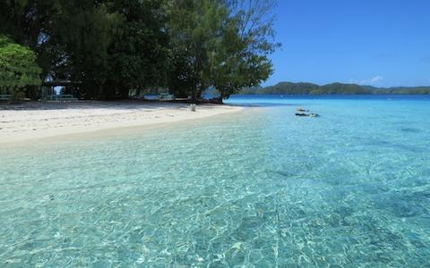 青い海、深い緑、マングローブ蟹も堪能できるパラオ