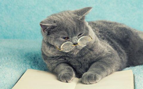 メガネデザイナーが伝授 「似合うメガネ」を選ぶコツ