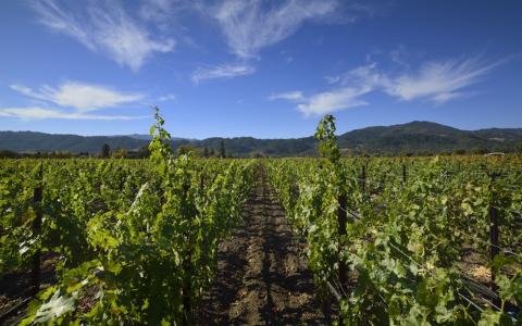 仏人のワイナリストが語る、カリフォルニアワインの魅力