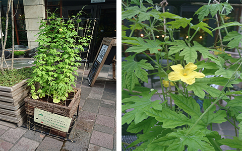 「GROW GREEN PROJECT」91日目〜黄色い花が咲きました!〜