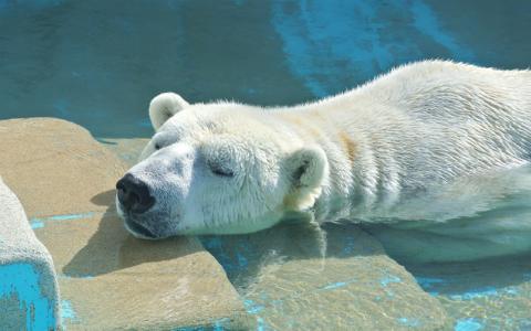 快眠セラピストがすすめる「気持ちよく眠れる室温」