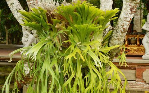 世界の珍しい植物が大集合「ウルトラ植物博覧会」