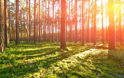 森の中、オールナイト映画祭で「ゆめうつつ」を味わう