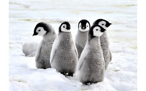 女子大生が開発したペンギンロボットがすごい!