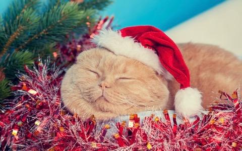 クリスマスはどこ行く?【最旬おでかけニュースBEST5】