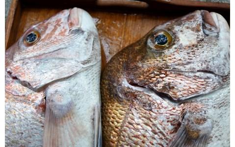 日本一の釣りの祭典、オススメは「アイドル総選挙」!?