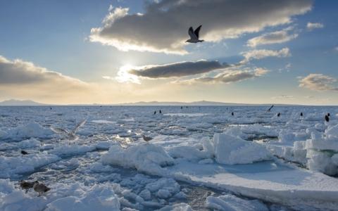 一度は見るべき「日本の冬絶景」1位は?