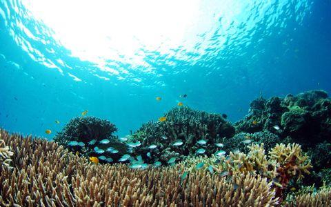 世界中の海を調査、「タラ号」が見た沖縄の惨状