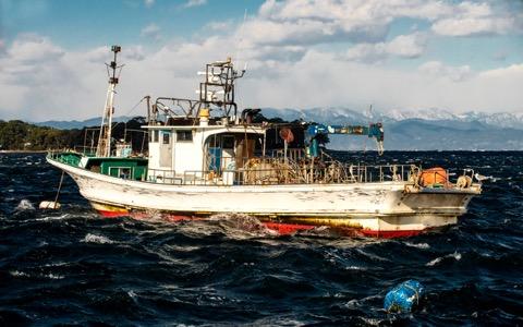 即禁漁も!? 太平洋クロマグロの厳しい現状