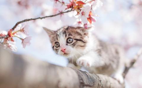 猫の日(2/22)に始まる「マイニャンバーカード」