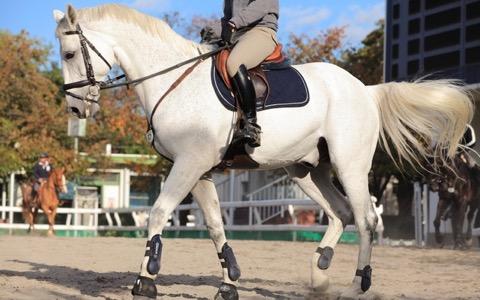 馬と出会ったことによって人類が進化したって本当?
