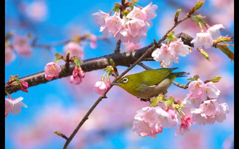 春にピッタリのフルートの名曲をセレクト!