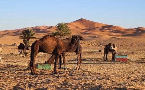 北アフリカの最新ロック&モロッコ料理を紹介