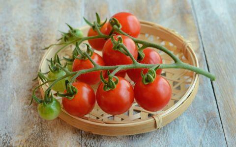 ベランダ菜園、初心者は何から始めるべき?