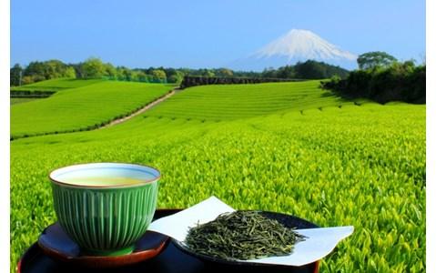 専門家が教える「新茶」の美味しい淹れ方は?