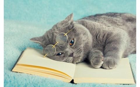 スマホで自分だけの本屋が開ける!?