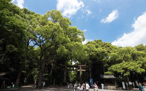 100年計画の「明治神宮の森」、いよいよ完成間近?