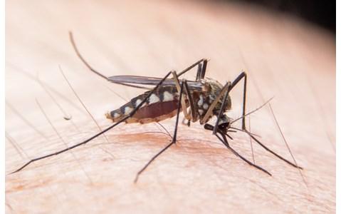 蚊に刺されやすい服の色は何色?