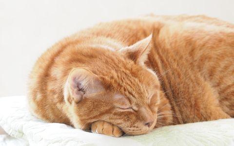 オシャレな部屋で暮らす猫を、覗き見できる展覧会
