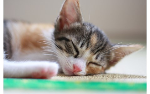 「眠りは技術」常識破りの睡眠テクニックとは?