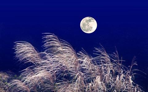 月と日本人、実はDNAレベルで関係がある?