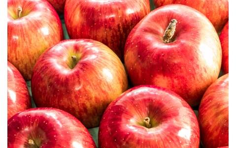 新人オーディションも大注目の「りんご音楽祭」って?