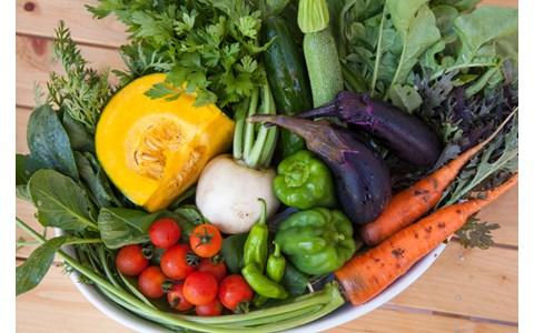 誰でも簡単! 冷蔵庫の野菜を長持ちさせるコツは?