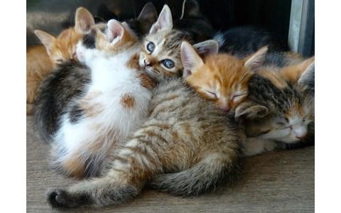 アンディ・ウォーホルと25匹の猫の話