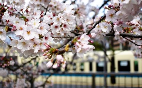 いきものがかり水野良樹が桜を見て気付かされたこと