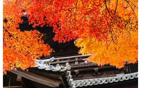 秋の京都に思いを馳せながら聞きたい一曲