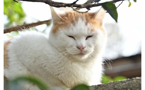 猫写真家・沖昌之に聞く、猫を上手に撮るコツは?