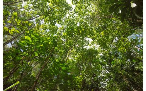 ワイルドな自然の地 ハワイでの自給自足生活の魅力