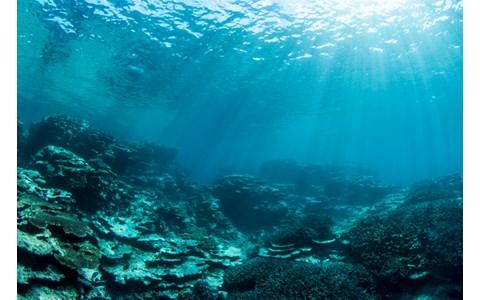 震災直後の海中で見たものは…水...