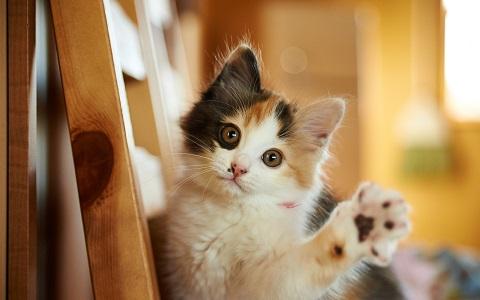 ネコ好きにはたまらない!「ネコのライフスタイル」を考える展覧会