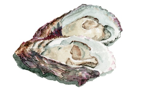 「牡蠣の殻」を練り込んだ石鹸、高校生が発案!その狙いは