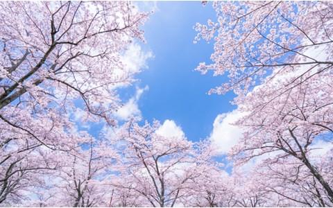 美術館でお花見! 「桜がテーマ」のオススメ展覧会