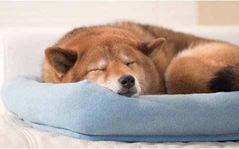 愛犬と一緒にリラックス! 今話題の「ドッグヨガ」って?