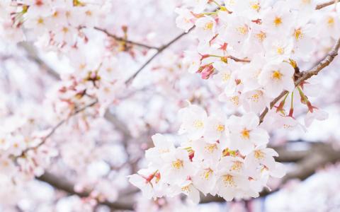 春分の日、世界ではどう過ごす? モアイ像との関係も…