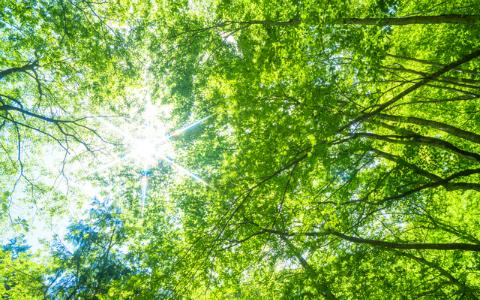 「森の空気感」まで忘れられない…人気モデル、柴田紗希の胸に残る映画