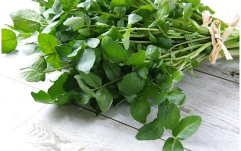 「育毛効果」が判明した意外な野菜って? 春のハーブの効果的な食べ方をご紹介