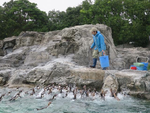 山口智充&浦浜アリサが「葛西臨海水族園」を満喫! 120匹のペンギンへのエサやりを見て…
