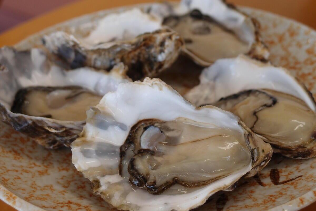 中田英寿、広島で牡蠣の養殖を営む「かなわ水産」を訪問!広島の牡蠣が美味しい理由とは?