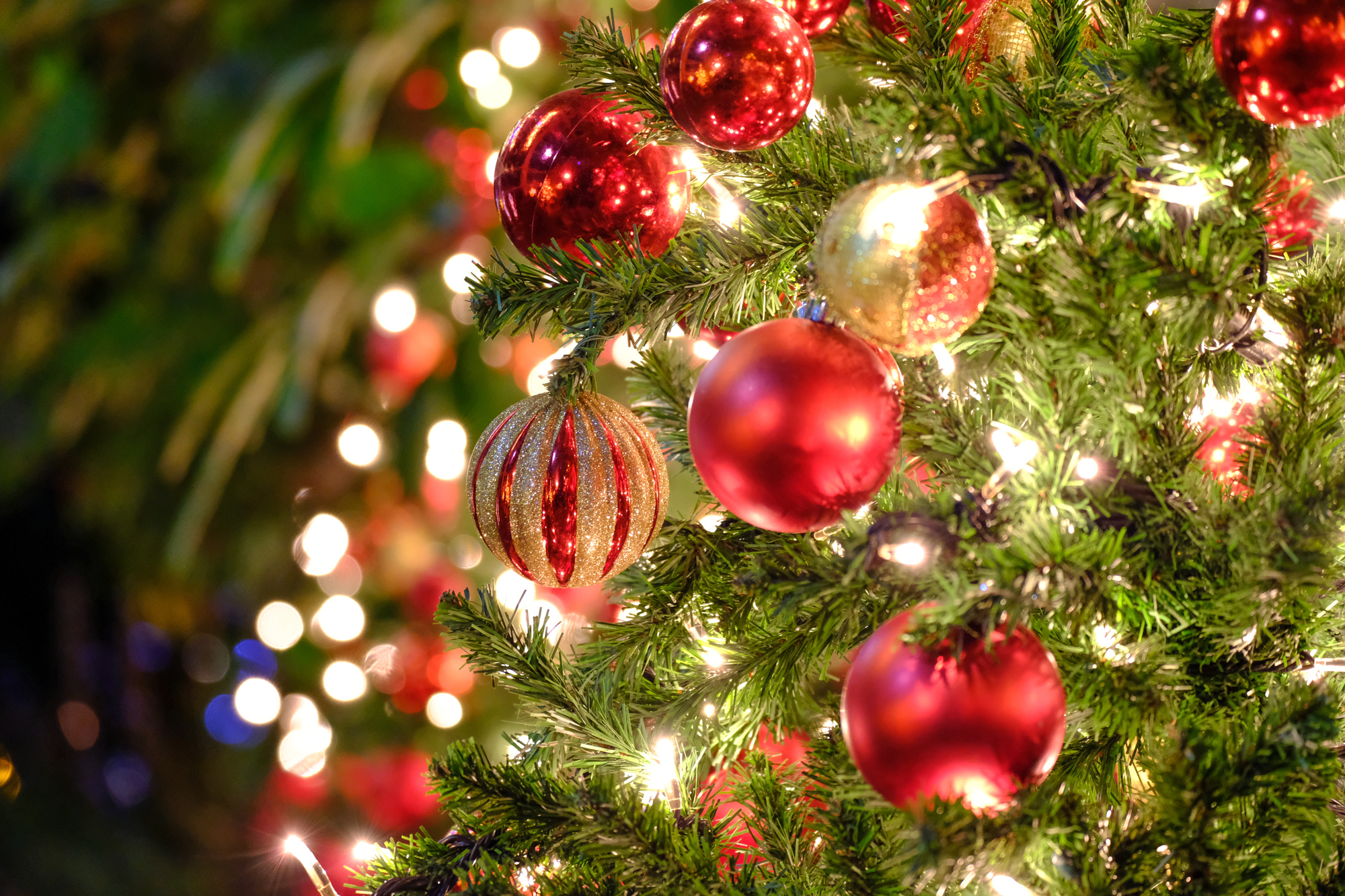 ロサンゼルスで暮らす人たちは、クリスマスをどう過ごしている?