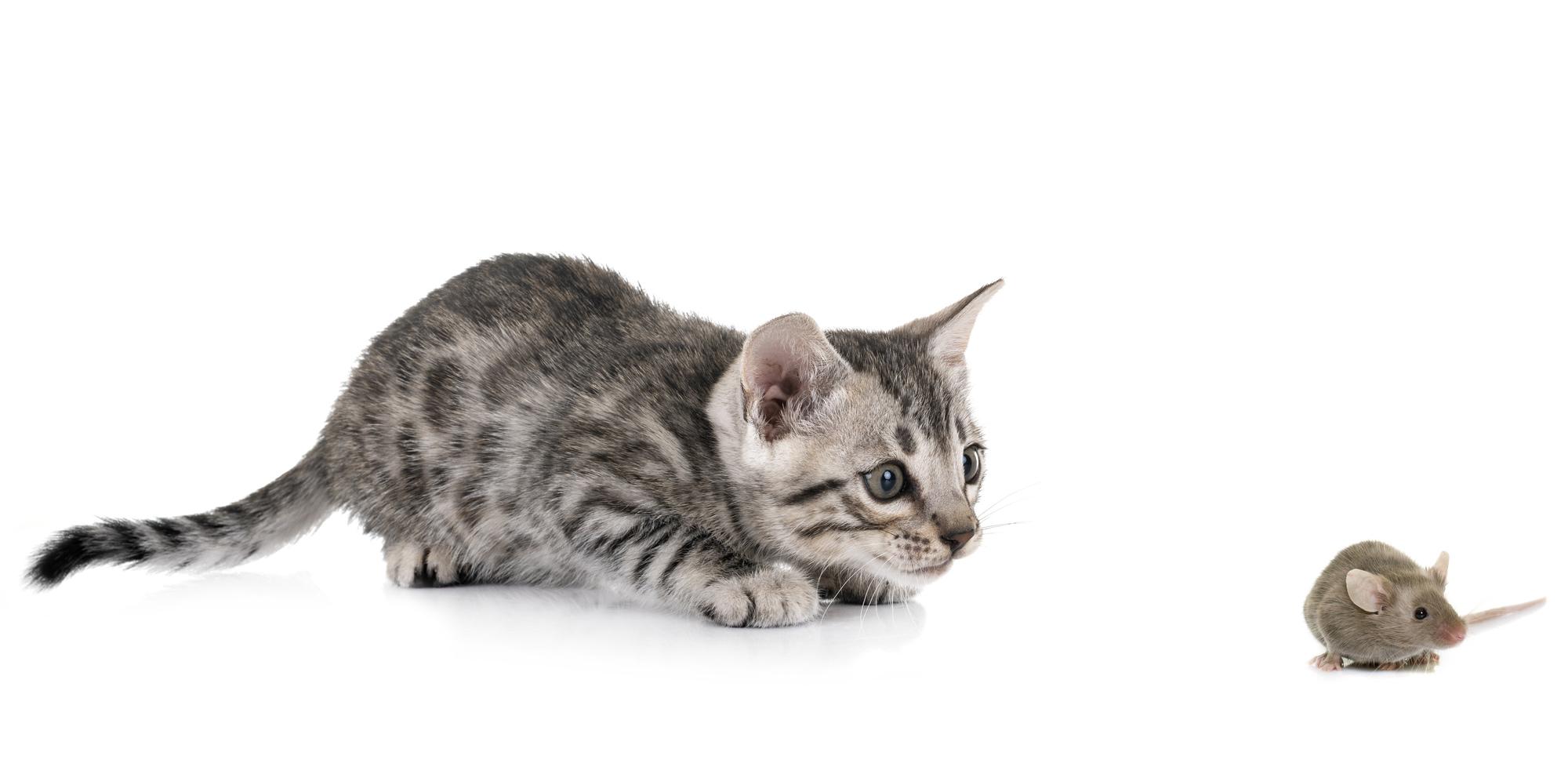 猫が愛されるのは、ねずみのおかげ? 『ざんねんないきもの事典』の著者が解説