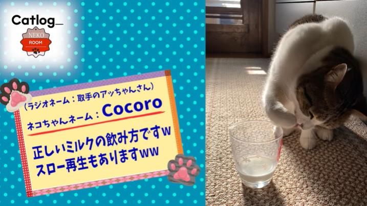【猫動画】ボールを打ち返したり、手で水を飲んだり…器用な猫がかわいい!